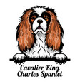 cavalier king charles spaniel - color peeking dogs vector image vector image