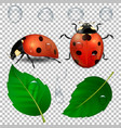 close-up realistic ladybugs water drops vector image vector image