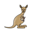 cute kangaroos icon image vector image vector image