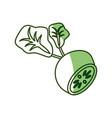 delicious radish vegetable vector image