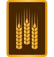 golden wheat ears vector image vector image
