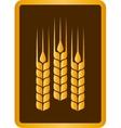 golden wheat ears vector image