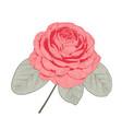 red camellia rose form flower vector image vector image