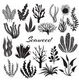 aquarium seaweeds underwater plants ocean vector image vector image