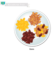 Raisins or Dried Grape The Popular Snack vector image vector image
