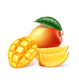 realistic ripe mango fruit with leaf vector image vector image