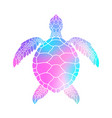 colorful turtle vector image vector image