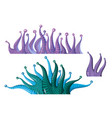 fantastic underwater plants algae vector image