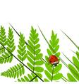 Fern Leaf and Ladybug vector image