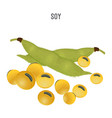 ripe soy beans that replace meat for vegetarians vector image