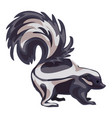 skunk icon cartoon style vector image vector image