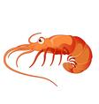 Cartoon shrimp vector image vector image