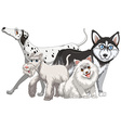 Different kind of cute dogs vector image vector image