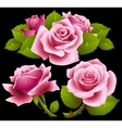 Pink roses set vector image vector image