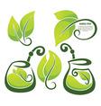 healthy herbal tea vector image vector image