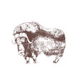 muskox hand drawn with contour lines on white vector image vector image
