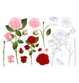pink and red rose outline vector image vector image