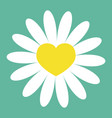 white daisy chamomile icon yellow heart center vector image vector image