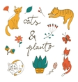 cats plants flowers and twigs vector image