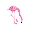 pink cute flamingo modern color cartoon character vector image