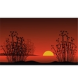 Bamboo on background of a dawn vector image vector image
