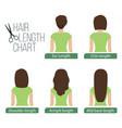 hair length chart back view vector image vector image