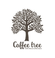 Hand drawn graphic tree with coffee beans vector image vector image