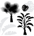 Palm trees black silhouettes on white background vector image