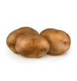 Potatoes vector image
