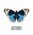 Realistic butterfly in flat style vector image