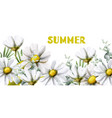 chamomile summer background watercolor vector image vector image