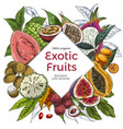 full color realistic drawn exotic fruits banner vector image vector image
