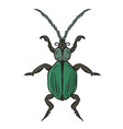 green beetle drawing by hand vector image