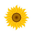 logo and symbol of sunflower for thanksgiving day vector image vector image