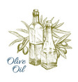 olive oil and green olives branch sketch vector image