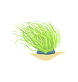 flat of long green sea plant coral vector image