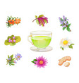 tea herbal additives set realistic herbs and vector image vector image