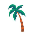 cartoon palm tree with green leaves isolated on vector image vector image