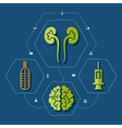 Medical flat infographic vector image vector image