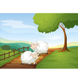 sheeps vector image