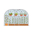glass greenhouse with growing plants in pots vector image vector image