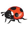 cartoon ladybird vector image vector image