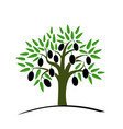 olive tree with green leaves tree with black vector image vector image