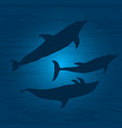 underwater world with dolphins vector image