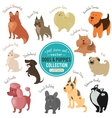 dogs and puppies depicting different fur vector image vector image