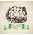 Hand drawn sketch cauliflower vegetable Eco food vector image vector image
