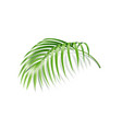 realistic fern tropical plant green leaf vector image vector image