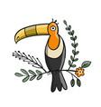 toucan paradise tropical bird for your design vector image vector image