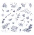 bundle of elegant winter decorative plants hand vector image vector image