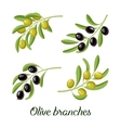set of realistic olive branches vector image